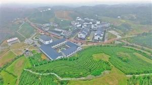 种茶种风景如何两相宜?苍南八亩后村的