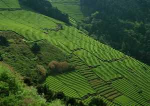 叶家茶 | 九曲岩茶村
